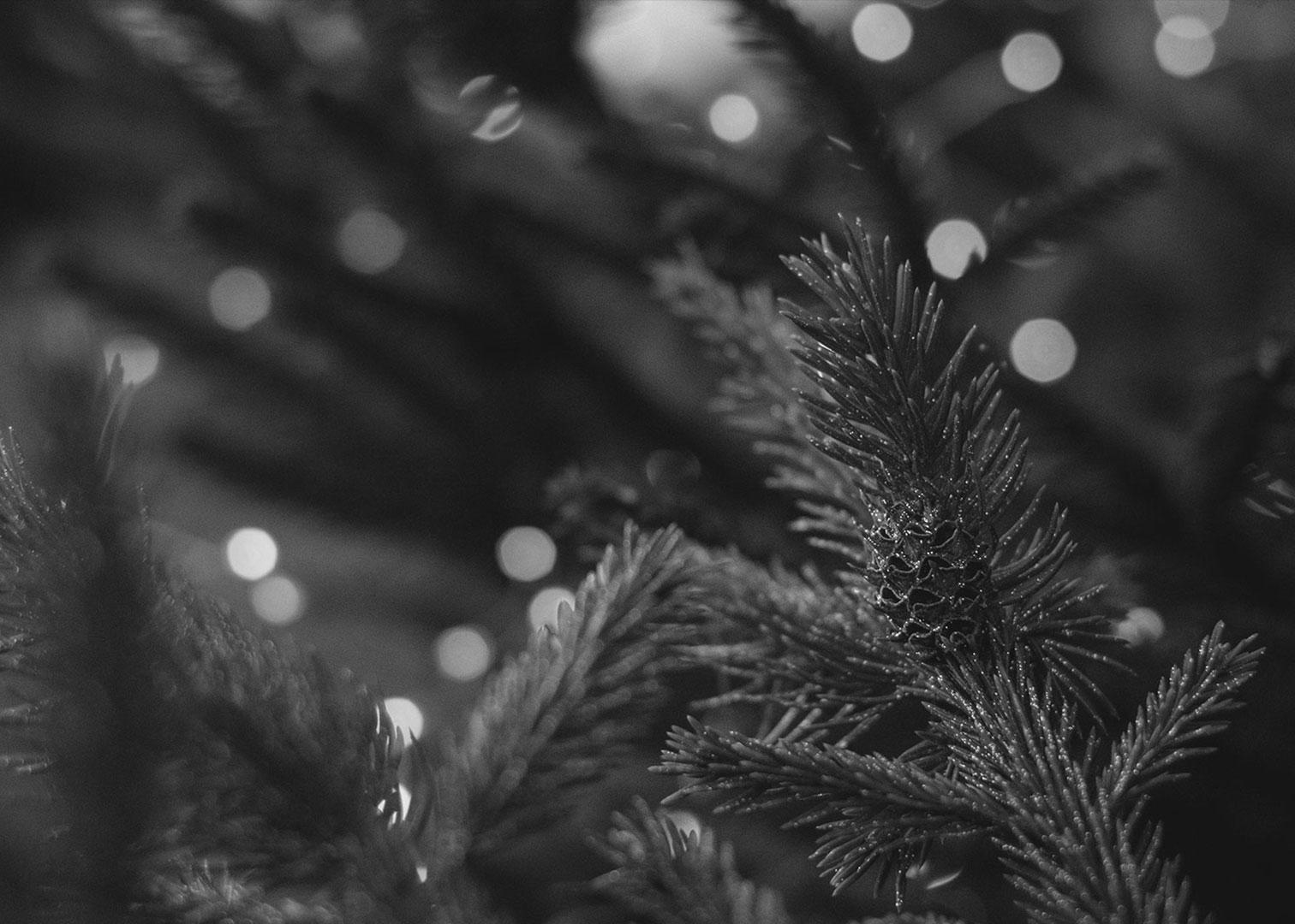 Christmas bubbles: the advice of Roberto Anesi