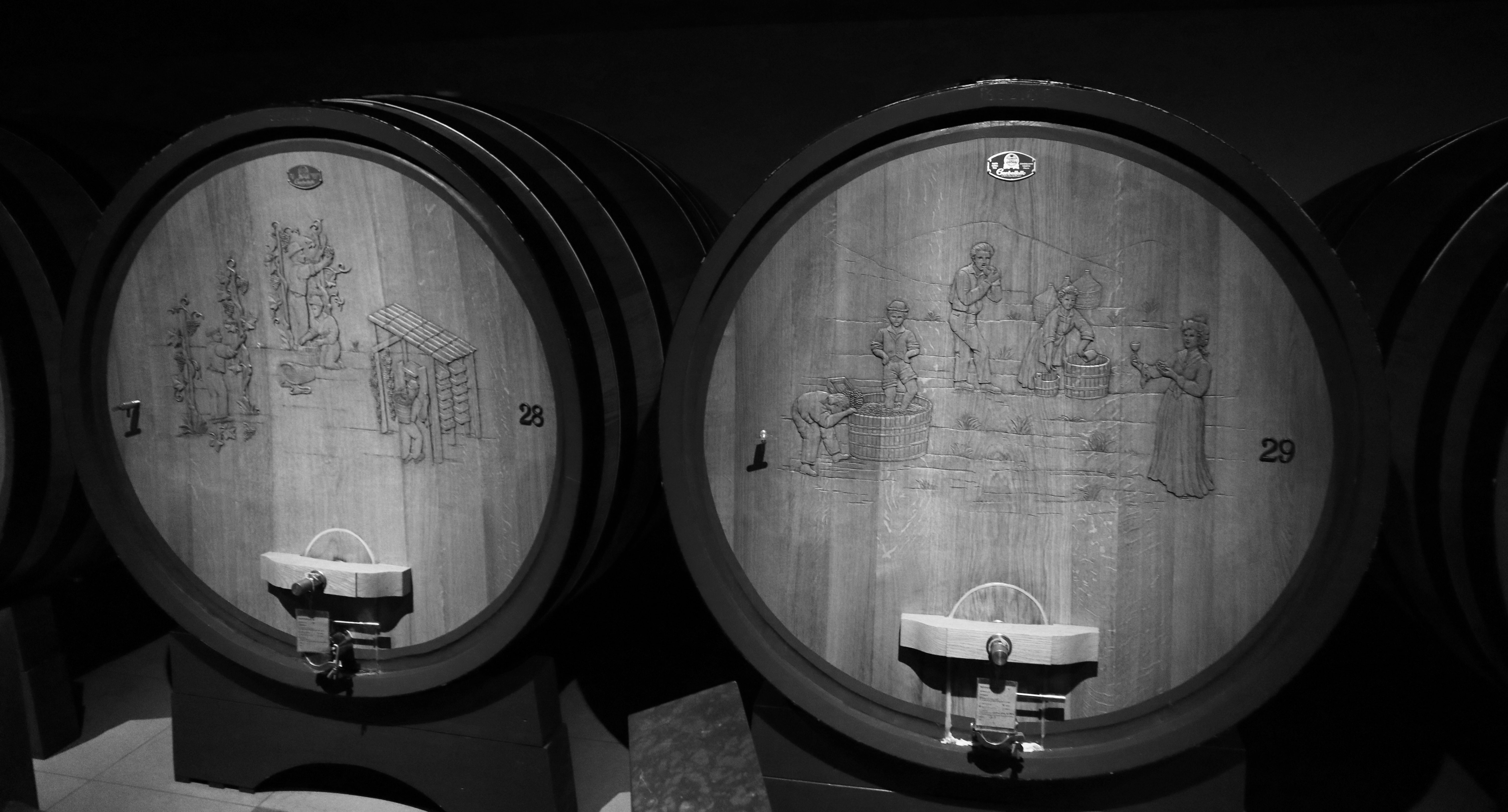 Dry passito wines between grace and majesty
