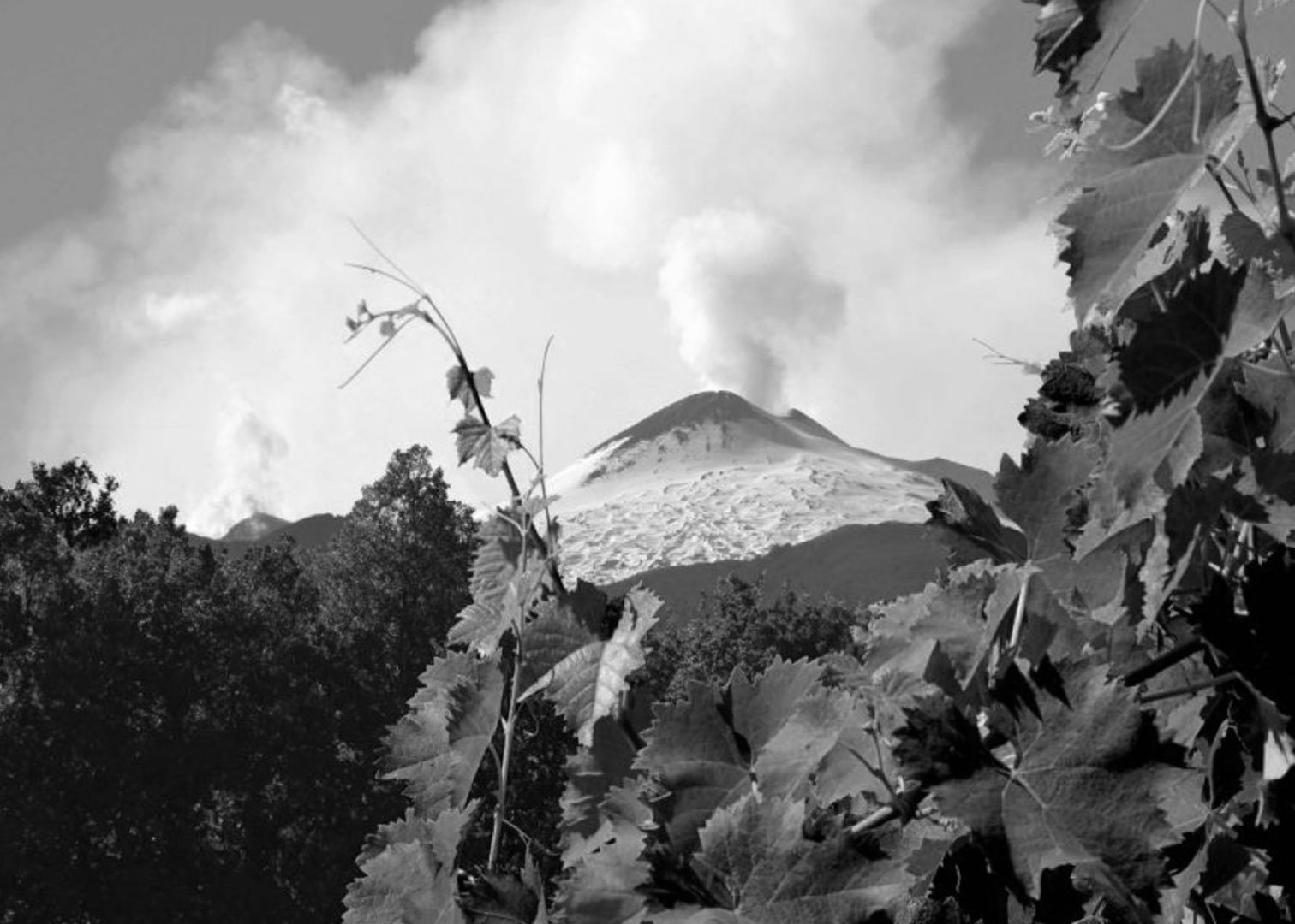 Volcano wines: a journey to the earth center